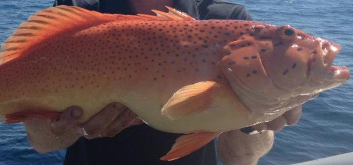 Amazing fish caught off Shark Bay
