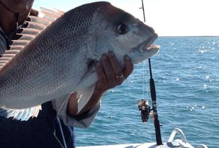 Fishing Charters Shark Bay