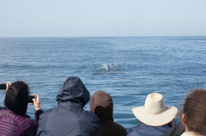 Tourists watching a whale breach
